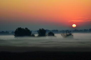 Bäume im Nebel von Ilija Stanusic