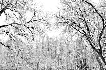 Sneeuwbomen von Alice Sies