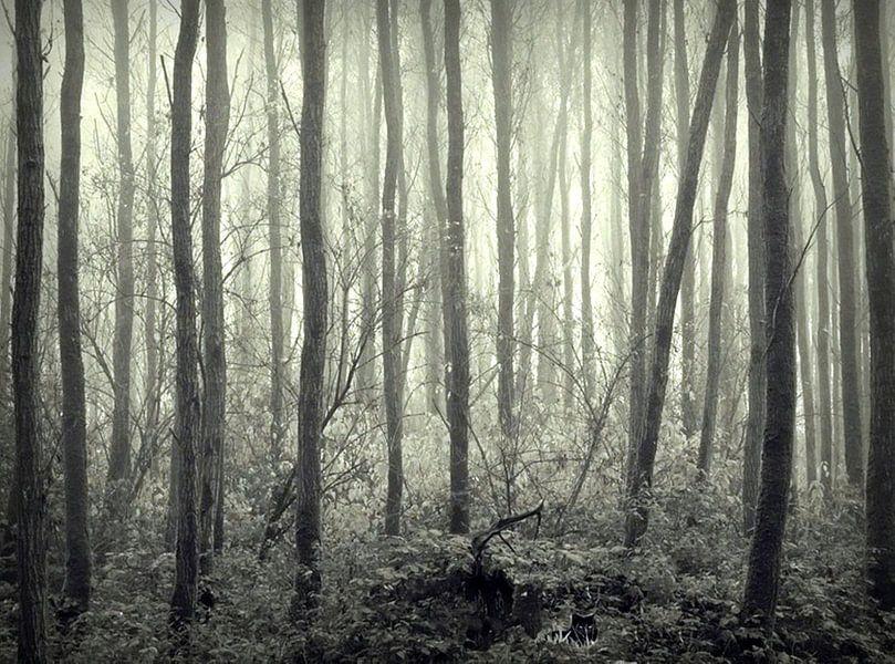 boom, bomen, boompjes ... Landschap