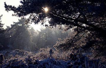Zonlicht door de bomen in de sneeuw, terwijl de nevels optrekken van