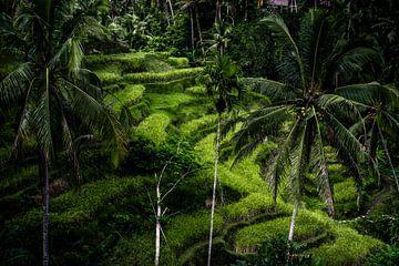 Indonesische Reisfelder von Frank  Derks