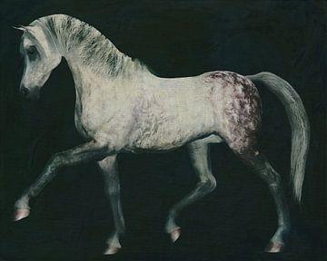Paard uitgestrekt