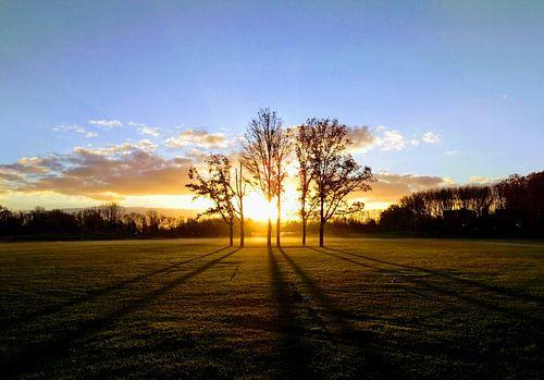 Zonsopgang in het park von Daniël van Leeuwen