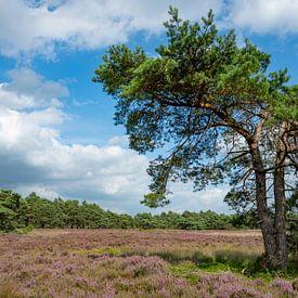 Bloeiende heideplanten en dennenbomen van Sjoerd van der Wal