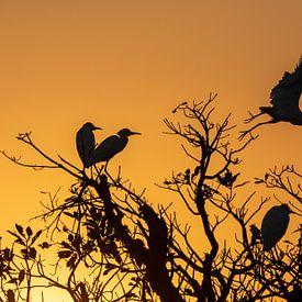 Kakadu National Park, Australië; Silhouet van reigers bij zonsopgang van Photo Henk van Dijk