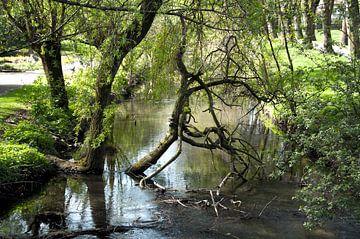 Bos en water, natuurlijk mooi van Ina Hölzel