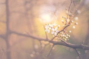 Spring at last van