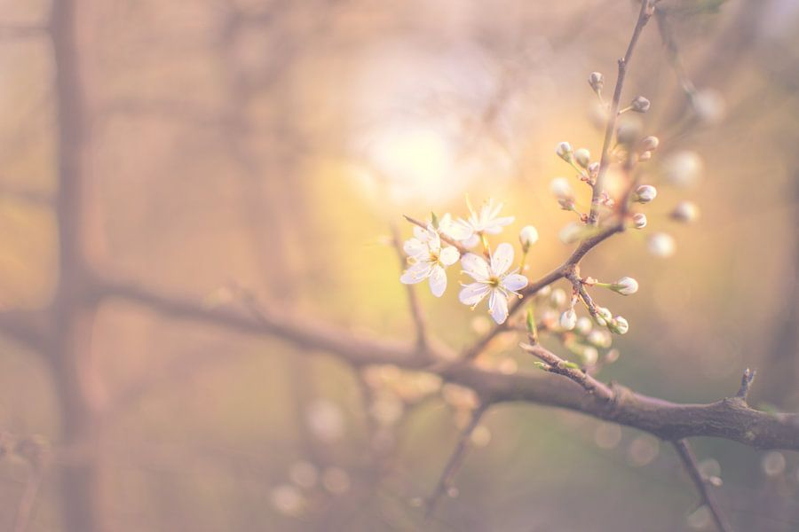 Spring at last van Alessia Peviani