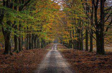 Herbst auf der Hoge Veluwe, Waldweg von Arisca van 't Hof
