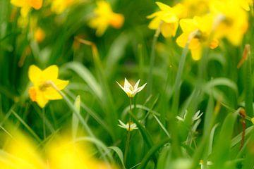 Blühender Frühling von Arjen Roos