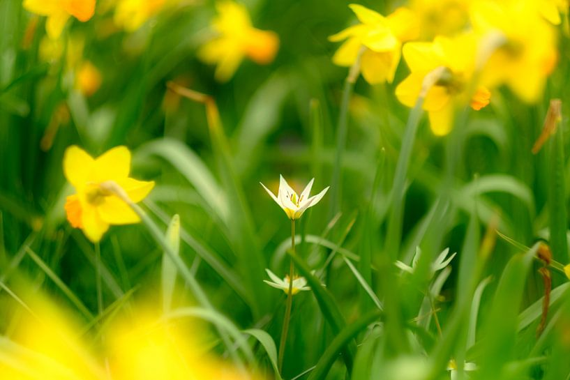 Lente in bloei van Arjen Roos