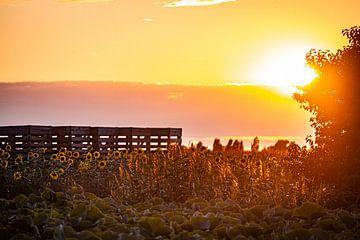 Sunflower sunset van Nicky Kapel