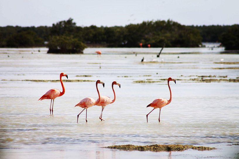 Flamingo's van Astrid Decock