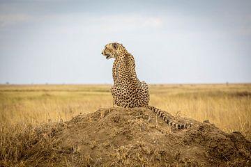 Jaguar op de savanne van Julian Buijzen
