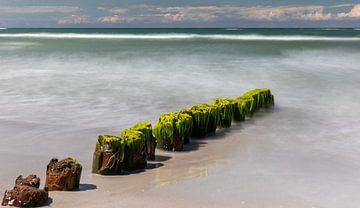 Ostseebuhne mit Algen von Britta Kärcher