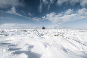 Winter, de eenzame boom van Alied Kreijkes-van De Belt