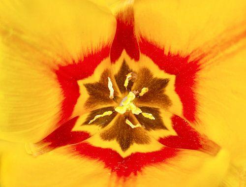 Tulpe von Markus Jerko