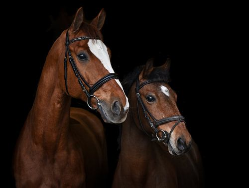 Paarden portret van Lisan Geerts