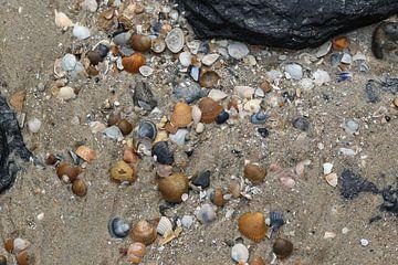 Muscheln am Strand der Westkapelle in Zeeland von Frans Versteden