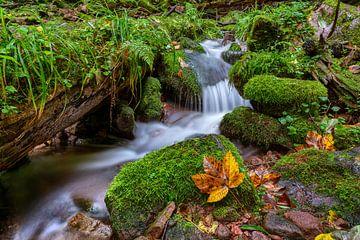 Herfst in de wolvenkloof van Uwe Ulrich Grün