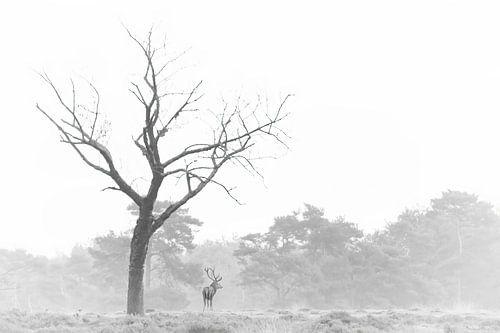 Edelhert in zwart/wit