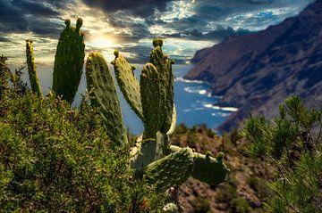 Cactussen en kliffen op La Gomera van Max Steinwald