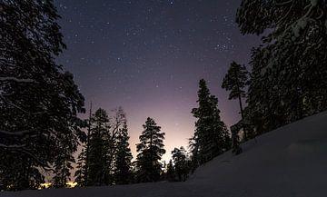 Sterne zwischen den Bäumen von Danny Leij