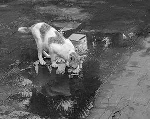 Drinkende kat - zwart/wit van