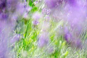 Lavendel van Mark Bolijn