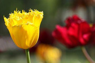 Tulpen in de Keukenhof (3) van Antwan Janssen