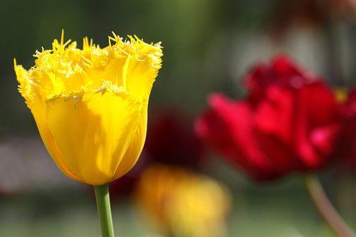 Tulpen in de Keukenhof (3)