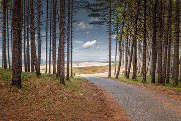 Fahrradweg durch den Wald von Jaap Spaans