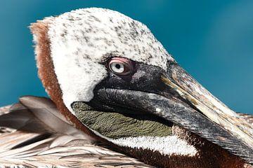 Portret van een bruine pelikaan van Frank Heinen