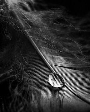 Wassertropfen von Thomas Jansen