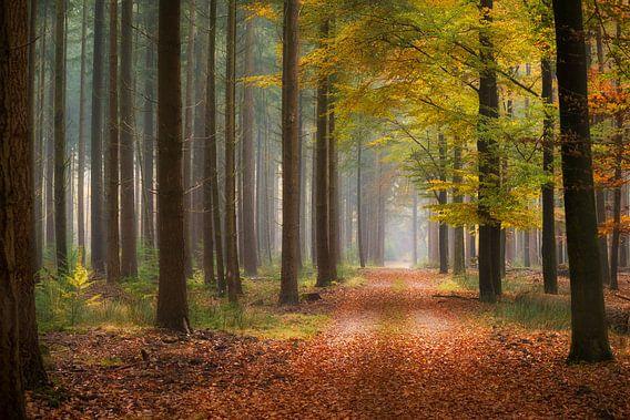 Hoog Buurlose bos van Frederik van der Veer