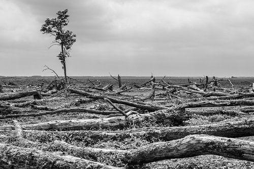 Einsamer Baum Oostvaardersplassen von Catstye Cam / Corine van Kapel Photography