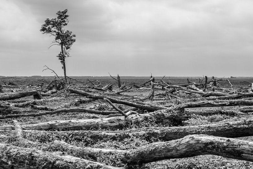 Eenzame boom Oostvaardersplassen van Catstye Cam / Corine van Kapel Photography