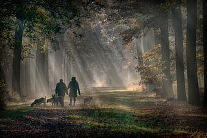 ochtendlicht in het bos van Egon Zitter