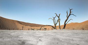 Death Vlei Death Tree van BL Photography