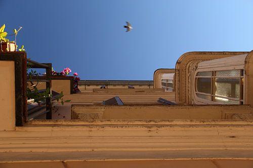 The Bird van