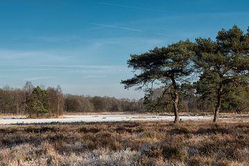 Egelmeer, winterlandschap in Veenendaal van Gerrit de Groot