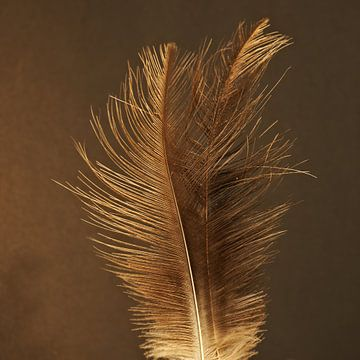 Gouden veren van BHotography