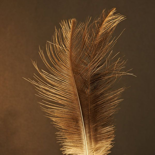 Plumes d'or sur BHotography