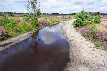 Flaque d'eau sur un sentier pédestre à travers la lande sur Folkert Jan Wijnstra