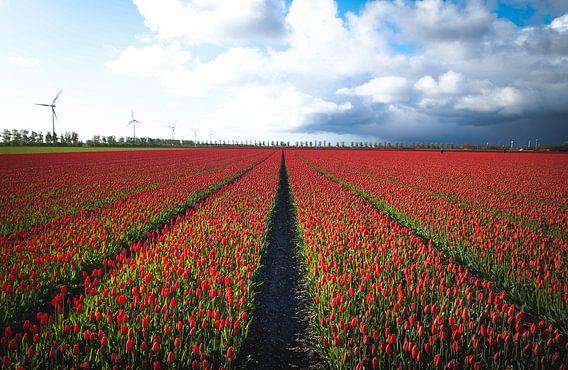 Vandaag is rood, de kleur van ... van Joris Pannemans