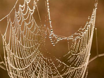 Spinnenweb met dauwdruppels van Karen de Geus