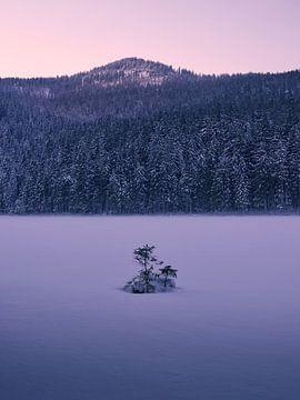 Zonsondergang bij bevroren Arbersee 2 van Max Schiefele