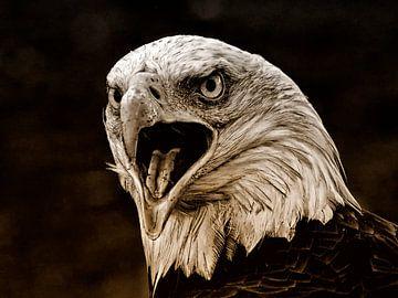 Weißkopf-Seeadler von Loek Lobel