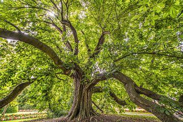 Vieil arbre dans le rétro-éclairage sur