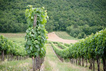 Wijnveld - Frankrijk von Tess Smethurst-Oostvogel